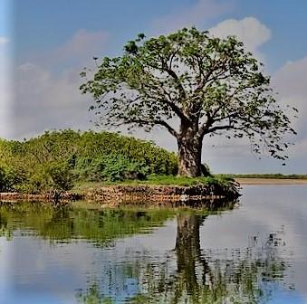 https://vard.si/wp-content/uploads/2020/04/VARD_AFRIKA-SENEGAL-DELTA-SALOUM.jpg